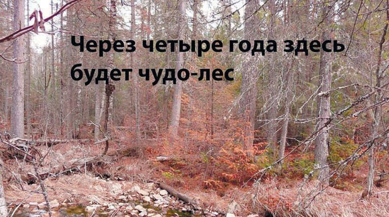 Через 4 года здесь будет чудо-лес