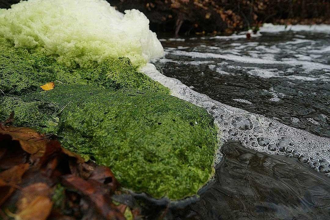 Вода загрязнена химическими отходами. Фото: Роберт Карапетян