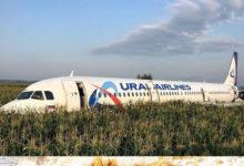 Посадка самолёта на кукурузном поле