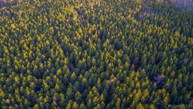 220 тысяч гектаров свердловских лесов вырубят для продажи китайцам – власти забыли свое обещание