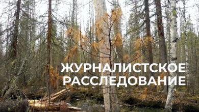 Фильм-расследование РИА «ФедералПресс» «Медный лес»