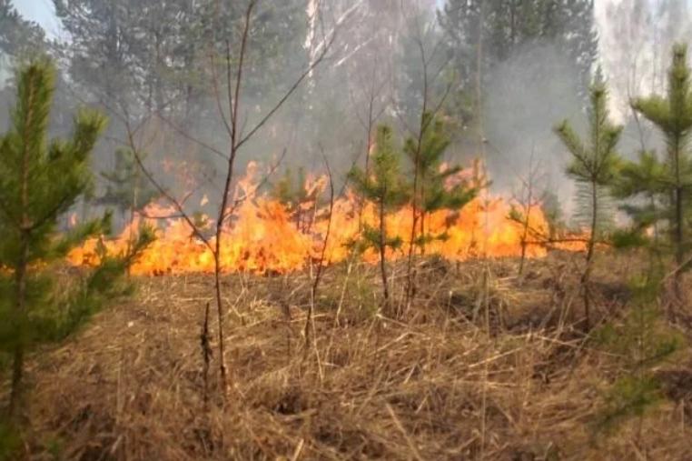 Партизанский отряд препятствует вывозу сибирского леса в Китай