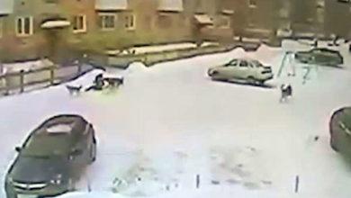 Рваная одежда и страх: в Североуральске бездомные собаки напали на ребенка