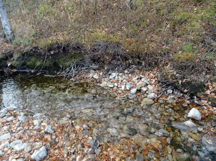 Целительная вода Тамшера