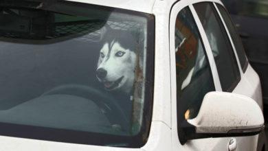 В новый КоАП введут штрафы за лай собак и неисправную автосигнализацию