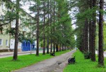 Лиственничная аллея Североуральск