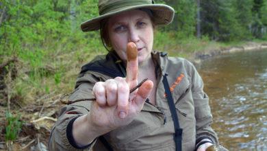 Зеленые реки на севере Урала продолжают убивать. Проблему купируют травлей экологов и их близких