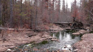 УГМК будет расширять уральский карьер, возле которого гибнет лес