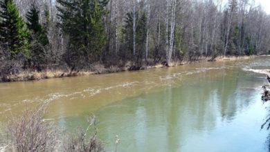 """После сообщений о загрязнении рек севера области Росприроднадзор внепланово проверит """"Святогор"""""""