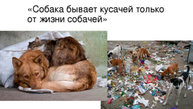Собака бывает кусачей только от жизни собачей…