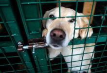 На Чукотке появятся государственные приюты для бездомных животных